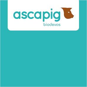 Ascapig